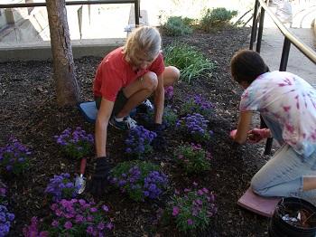 Two volunteers work in a garden