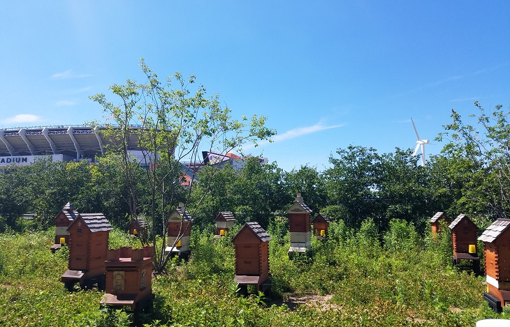 Urban beehives with Cleveland Browns stadium in the backdrop
