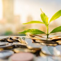 Plant on pile coins with cityscape background